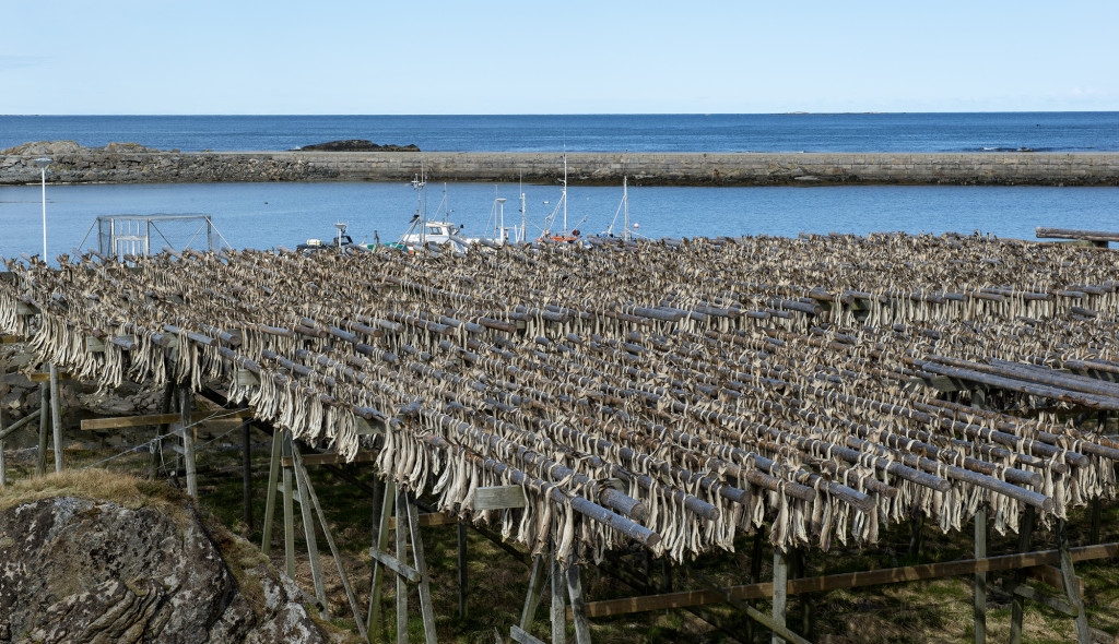 Både Lofoten og Vesterålen er et eldorado for lystfiskere, vi fik tilbudt nyfanget torsk flere gange. Det var så givtigt, at lystfiskerne ikke kunne spise alt de fangede selv og fryseren i campingvognen eller autocamperen var fyldt op. Men det er ikke kun lystfiskerne der fanger torsk, i vintermånederne fanges der store mængder torsk og sej. De bliver rensede og hovedet skåret af og hængt op i store stativer til tørring. I maj og juni måned tages de ned og pakkes til de sydeuropæiske lande. Hovederne sælges til Afrika, hvor de indgår i lokale retter.