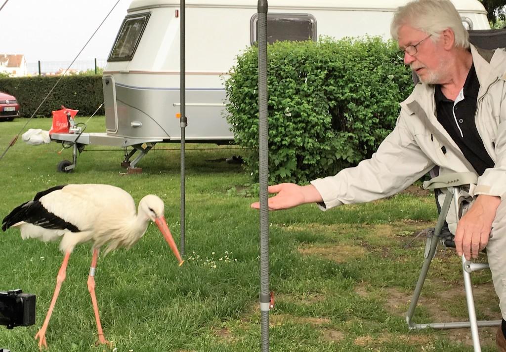 Jann fodrer storken som de genkender fra tidligere år, da den halter på det ene ben.