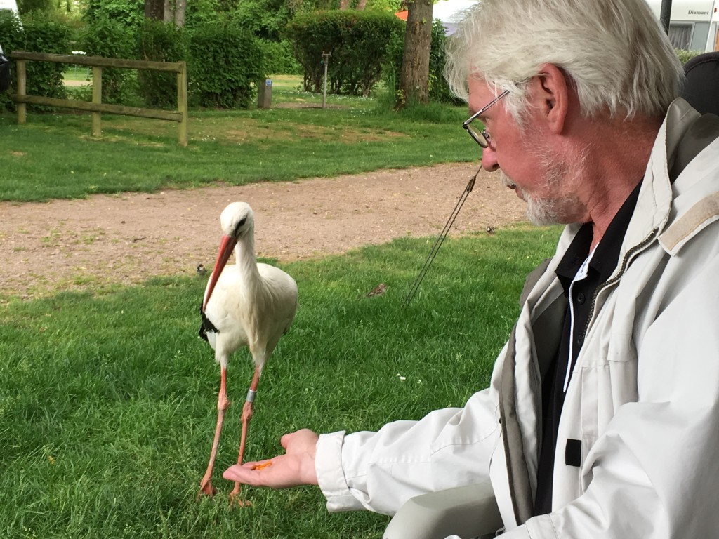 I Ribeauville i Alsace i Frankrig, mødes vi med min bror Jann og hans kone Anne og får besøg af storken. Der er mange storke i området og mange er ganske tamme.