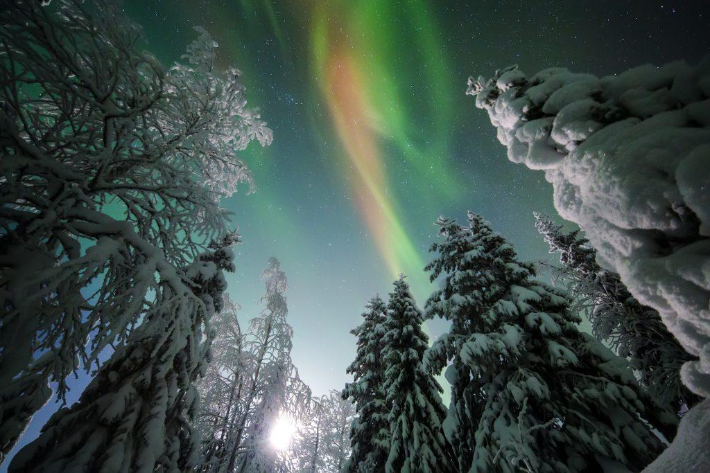 Aurora moon forest.