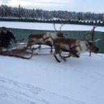 Nordkapp Vintertur 2015 – Del 5 – Jokkmokk i over 1 m. sne