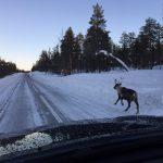 Nordkapp Vintertur 2015 – Del 7 – Fra Jokkmokk til Ishotellet