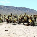 Det vilde vesten – 2010 – Del 20 – Joshua Tree National Park