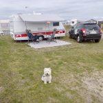 Hund elsker camping