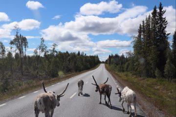 Alene til Nordkapp – Her er den lange film