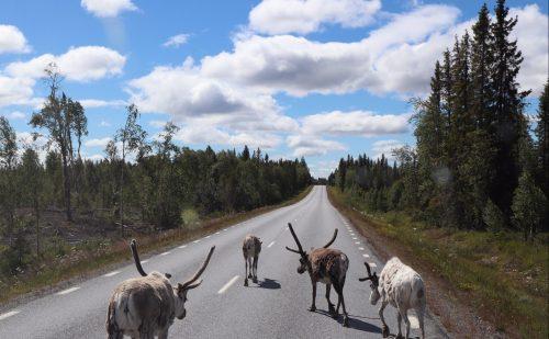 Alene til Nordkapp – Her er hele rejsen