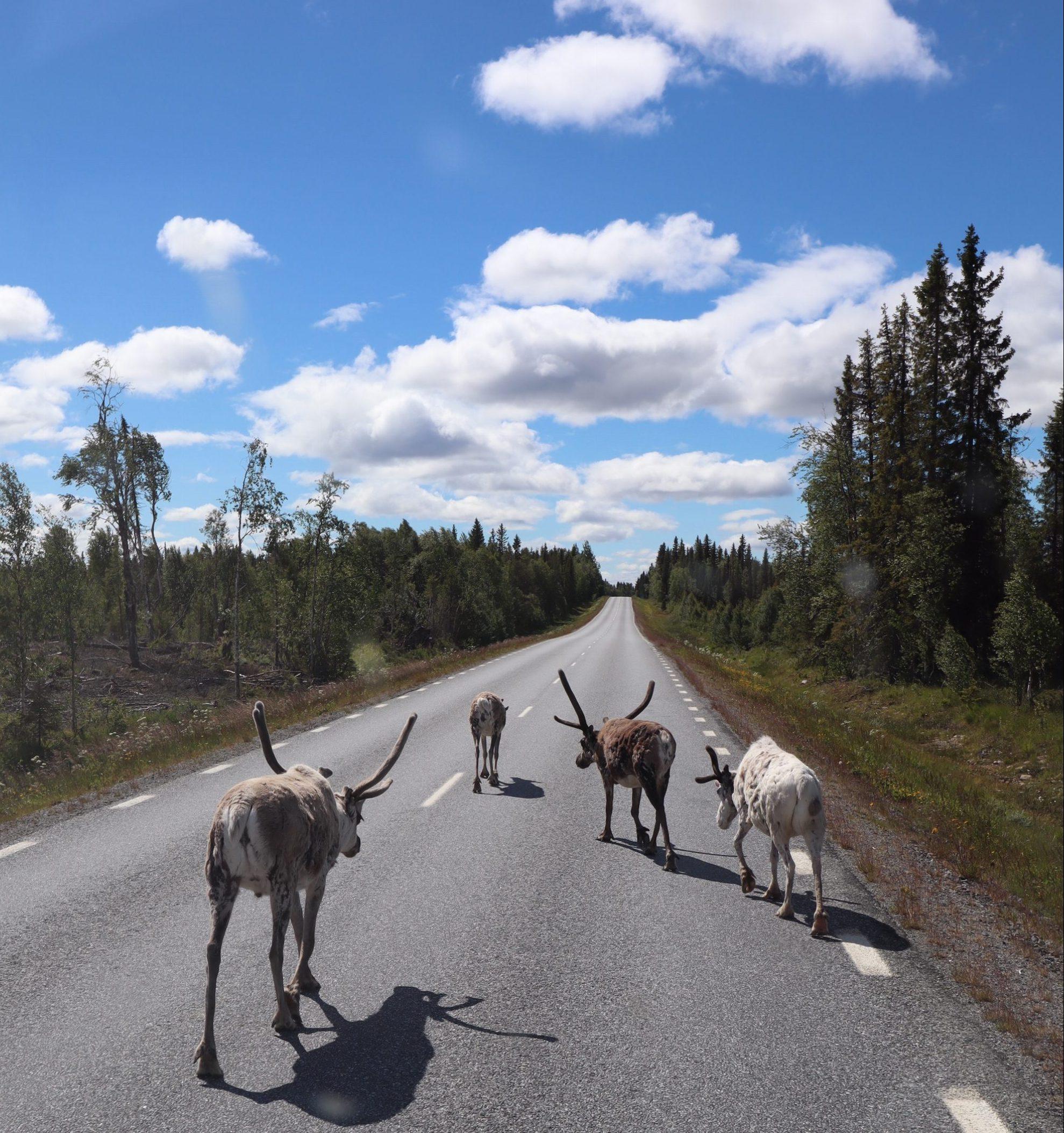 Alene til Nordkapp - Her er hele rejsen i en lang film + film